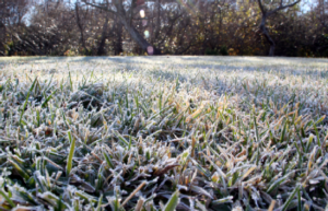 The final Cut - Of the Season! Prepare your lawn for winter.