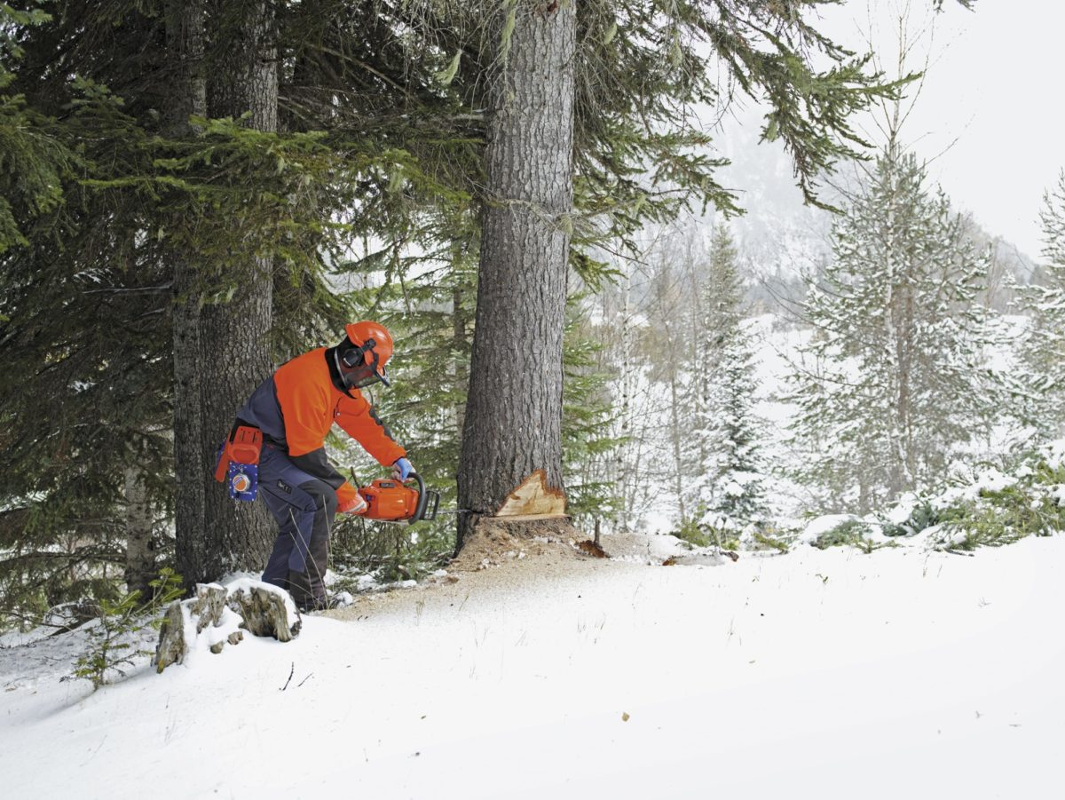 Man Cutting Tree with Chainsaw this winter