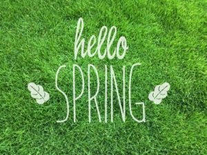 Spring in the garden -  Looking after your lawn while in Self-Isolation