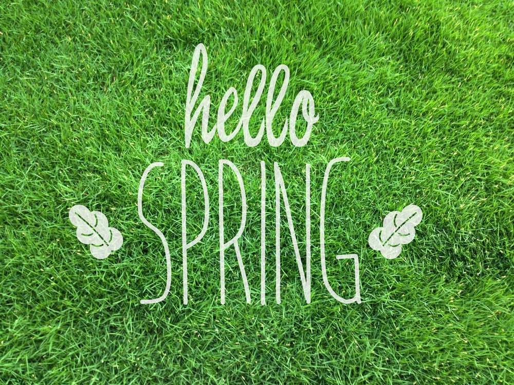 Spring in the garden –  Looking after your lawn while in Self-Isolation