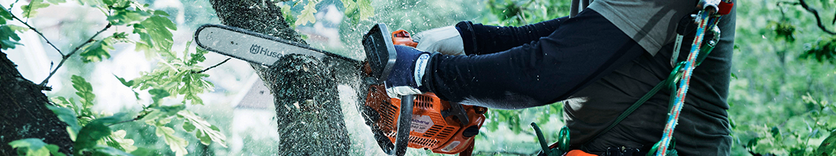 Cutting tree with Husqvarna Chainsaw